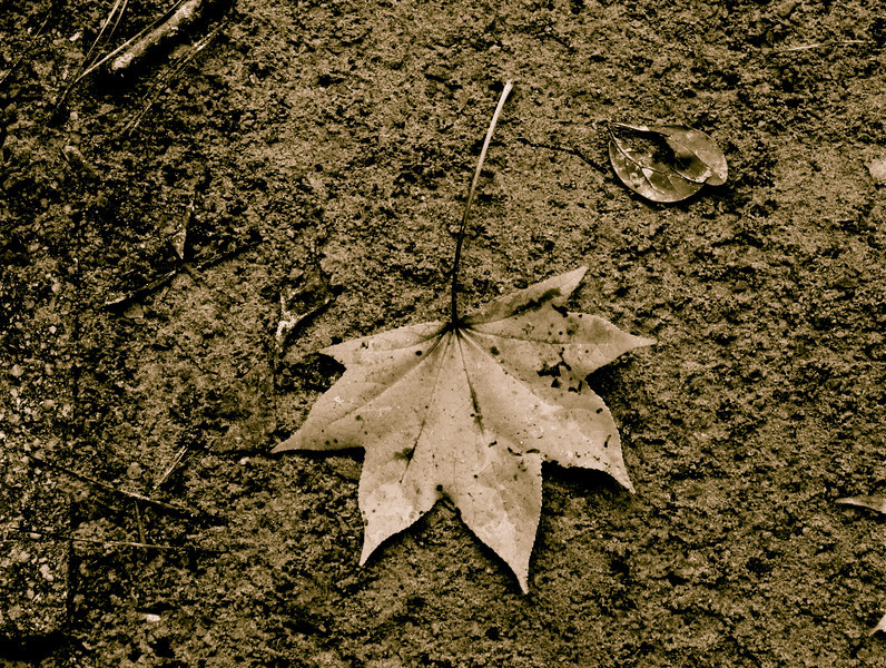 """""""Journey of a Leaf""""<br /> <br /> <br /> At no time are we ever in such complete possession of a journey, down to its last nook and cranny, as when we are busy with preparations for it. ~Yukio Mishima ~"""