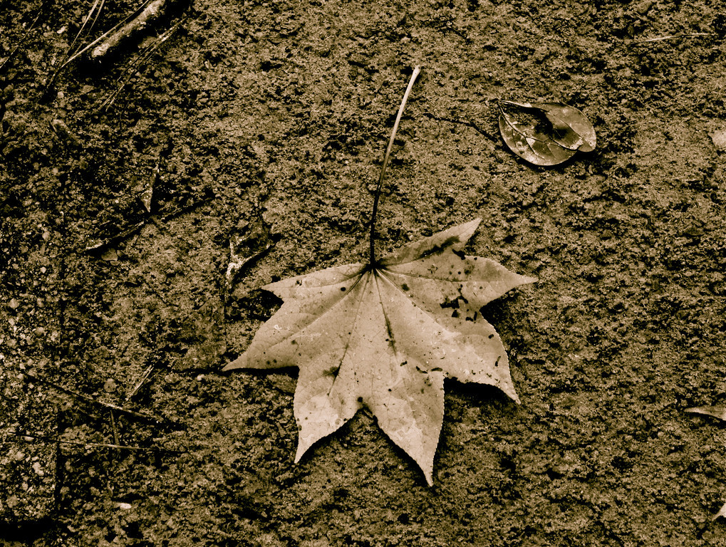 """Journey of a Leaf""<br /> <br /> <br /> At no time are we ever in such complete possession of a journey, down to its last nook and cranny, as when we are busy with preparations for it. ~Yukio Mishima ~"