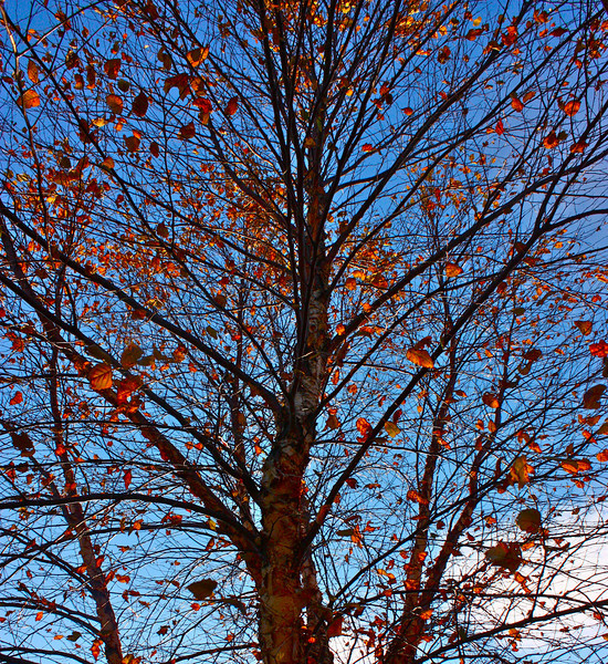 """On a Lazy Autumn Afternoon""<br /> <br /> <br /> Thank you everyone for your wonderful comments on yesterday's daily.<br /> <br /> <br /> Everyone must take time to sit and watch the leaves turn.  ~Elizabeth Lawrence"