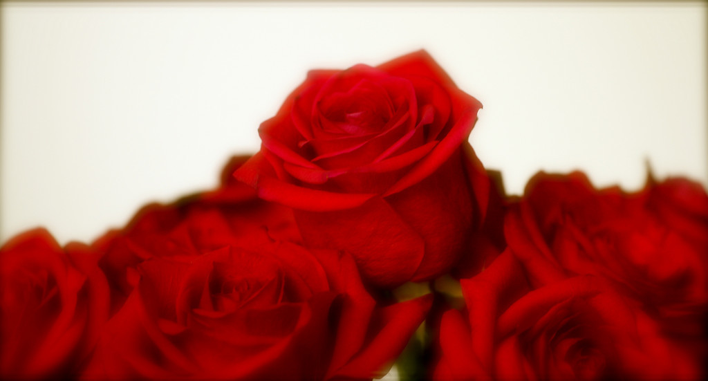 """Dreamy Roses""<br /> <br /> <br /> ""Avoid being impatient. Remember time brings roses.""~Anonymous~"