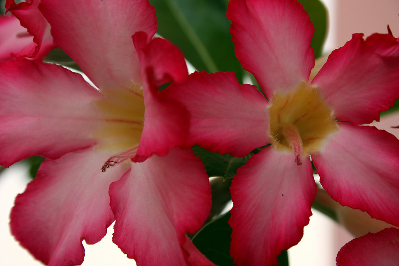"""Desert Rose""<br /> <br /> <br /> ""What makes the desert beautiful is that somewhere it hides a well.""~ Antoine de Saint-Exupery ~"