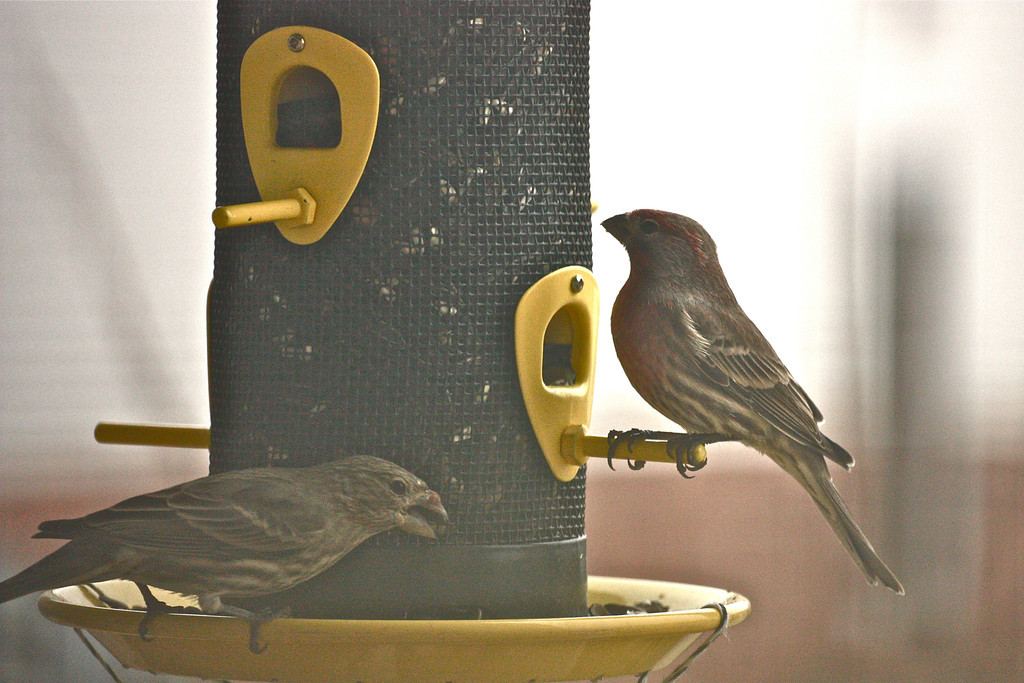 """""""Love Birds""""<br /> <br /> <br /> Birds are a miracle because they prove to us there is a finer, simpler state of being which we may strive to attain. ~Doug Coupland ~"""