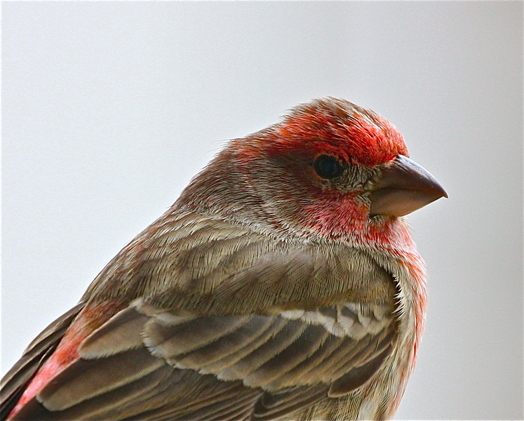 """""""Fine Feathered""""<br /> <br /> <br /> <br /> <br /> It is not only fine feathers that make fine birds.~Aesop~"""