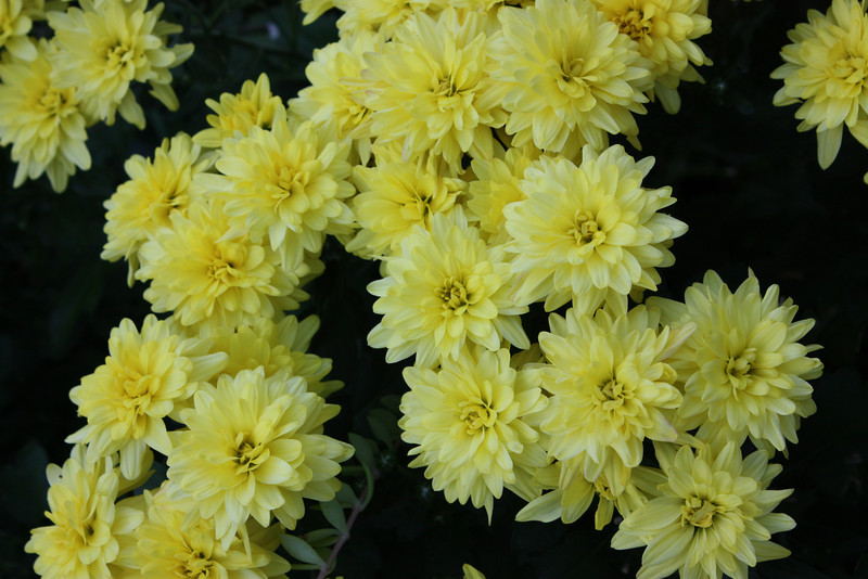 """Burst of Yellow""<br /> <br /> <br /> ""Silence is not always golden; sometimes it is yellow""~Anonymous~"