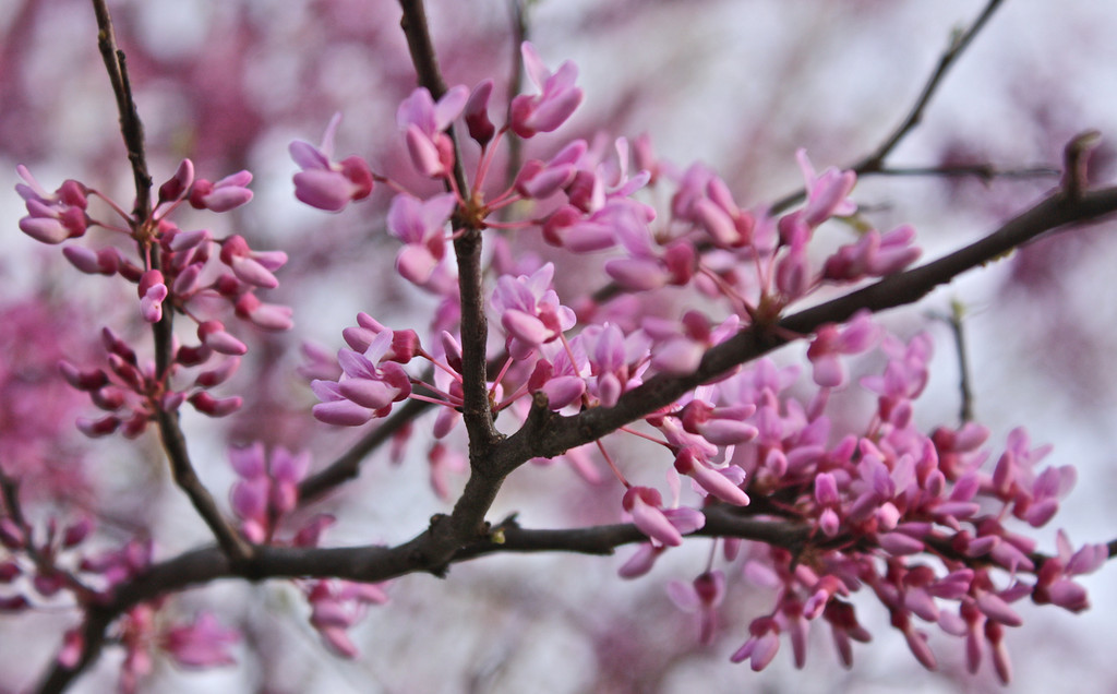 """""""Spring in bloom""""<br /> <br /> <br /> Spring shows what God can do with a drab and dirty world.  ~Virgil A. Kraft`~"""