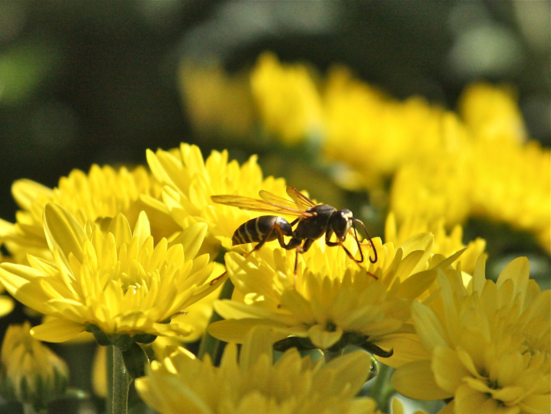 """""""Bugging""""<br /> <br /> <br /> When the bee comes to your house, let her have beer; you may want to visit the bee's house some day.  ~Congo Proverb~"""