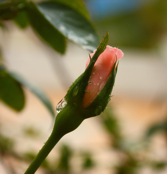 """Beginning""<br /> <br /> <br /> <br /> It is easier to resist at the beginning than at the end.~Leonardo Da Vinci~"
