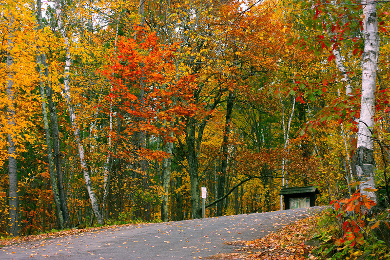 """Road to Fall""<br /> Thank you so much everyone for your likes and comments on yesterday shot !<br /> <br /> Delicious autumn! My very soul is wedded to it, and if I were a bird I would fly about the earth seeking the successive autumns.~George Eliot"
