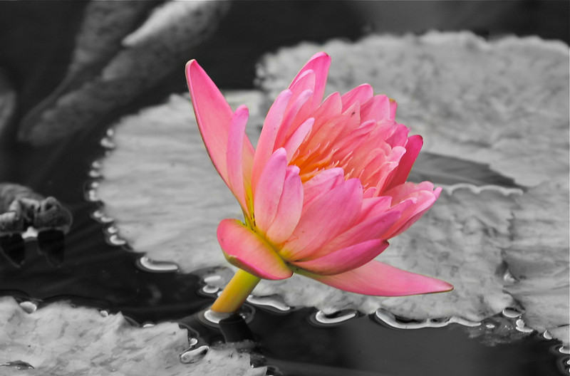 """""""Queen of the Pond""""<br /> <br /> To be a queen of a household is a powerful thing.~Jill Scott"""