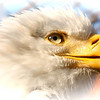 """Eagle's Eye""<br /> <br /> Great men are like eagles, and build their nest on some lofty solitude.~Arthur Schopenhauer"