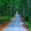 """Beautiful Path""<br /> <br /> ""You cannot travel the path until you have become the path itself""~"