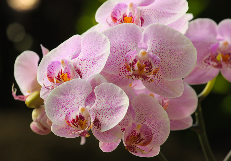"""Blushing Orchids""<br /> <br /> Though we travel the world over to find the beauty, we must carry it with us or we find it not.  ~Ralph Waldo Emerson"