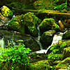"""Rain Forest""<br /> <br /> The creation of a thousand forests is in one acorn.~Ralph Waldo Emerson"