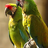 """Parrot Green""<br /> <br /> ""Live that you wouldn't be ashamed to sell the family parrot to the town gossip.""~Will Rogers"""