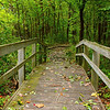 """""""Pathway to woods""""<br /> <br /> <br /> """"Reading about nature is fine, but if a person walks in the woods and listens carefully, he can learn more than what is in books, for they speak with the voice of God.""""~George Washington Carver~"""