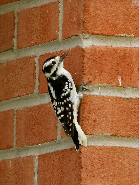 "Not a ""Brickpeckar""<br /> <br /> <br /> ""Even the woodpecker owes his success to the fact that he uses his head and keeps pecking away until he finishes the job he starts"""