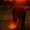 Apr 01/09<br /> <br /> I took this shot near a farm house. I liked this shot except that the light was reflecting constantly on the lense. I tried many shots for a clear picture, till the horse came near me to check out what I was doing :D