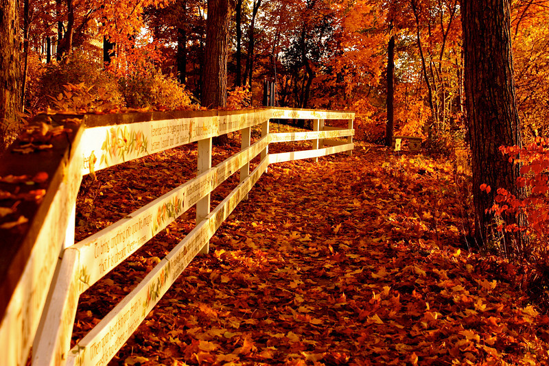 """""""Fall""""ing in Love...<br /> <br /> <br /> A successful marriage requires falling in love many times, always with the same person. ~Mignon McLaughlin~"""