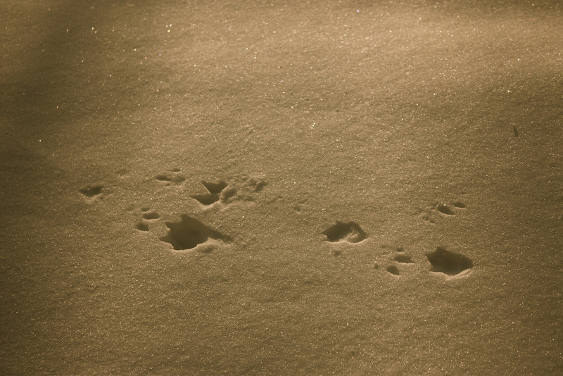 """""""Foot Prints""""<br /> <br /> <br /> """"One who walks in another's tracks leaves no footprints.""""~Proverb~"""