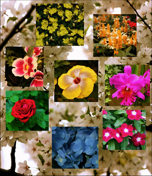 """""""Beauty in different forms""""<br /> <br /> <br /> Flowers are the sweetest things God ever made, and forgot to put a soul into.  ~Henry Beecher~"""