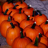 """Pumpkin Army""<br /> <br /> <br /> An army of principles can penetrate where an army of soldiers cannot. ~Thomas Paine ~"