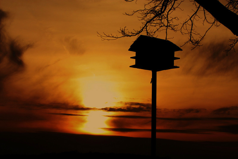 Mar 26/09<br /> I was not intending to repeat another sunset pic so soon :) <br /> but as I was driving by the lake,I saw this bird house with a bright sunset at it's back drop. Just loved it !