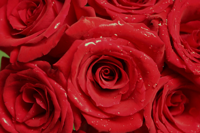 """Roses""<br /> I turn another year old today ! It's wonderful that it coincides with Memorial Day.I dedicate these roses to all war heroes !<br /> <br />       <br /> <br /> <br /> <br /> ""It takes a long time to grow young."" ~Pablo Picasso~"