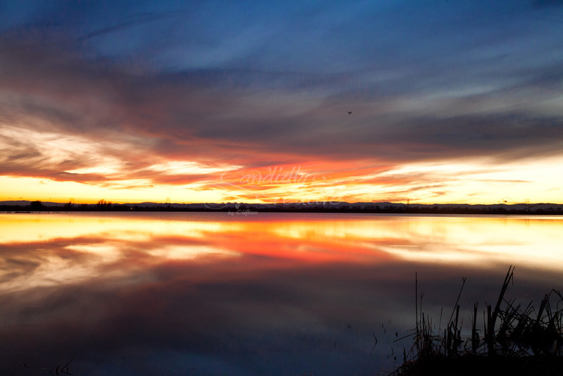 1-25-2012 Flight of color :) sunset over a rice field in northern california :) I love reflections!