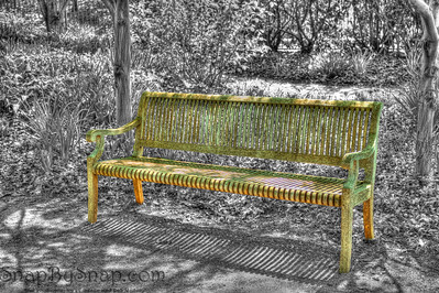 Bench in park