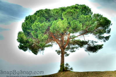 Lone tree in HDR