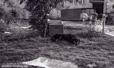 1974 Abilene , Tx