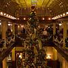 The tree inside the Boulderado hotel