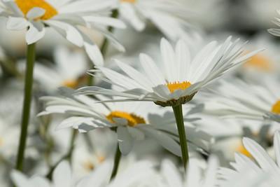 Flower 067