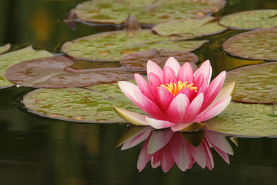 Flower 001