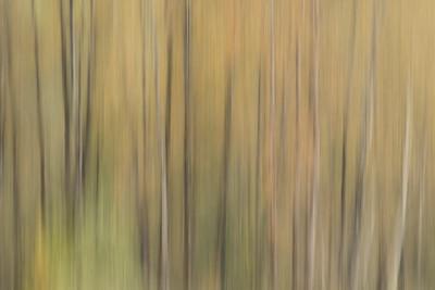 Trees 005