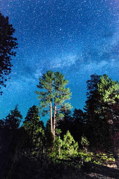 1205-2781 v3 Bryce Forest & Milky Way