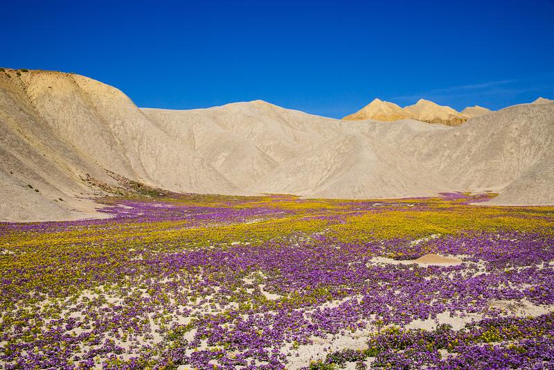 Sohm-0504-5954 v3 Wild Flowers Badlands