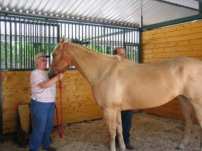 examining Sally's mares back