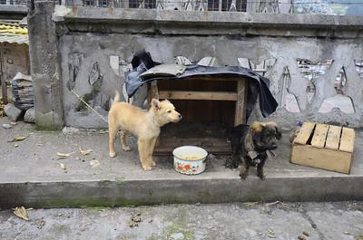 Los Perros en la Catedral