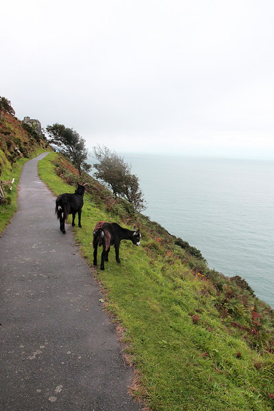 An early introduction to the 'mountainous' nature of this section, the goats are plentiful and pester holidaymakers for tit-bits.