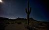 Moonlight Desert Cactus