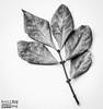 Red Leaves - DxO Filmpack 4