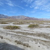 There is a fair amount of growth when you get away from the salt flats.