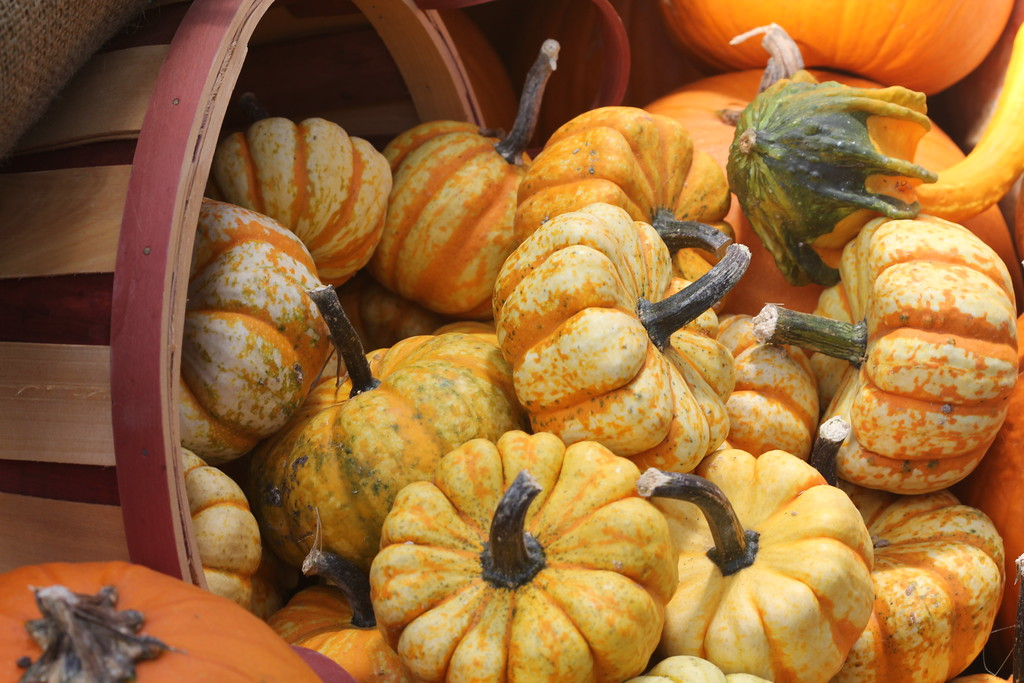 OCT 1 -- GOURDS  (SOOC)<br /> A pretty arrangement to welcome October!<br /> It will soon be one year that I celebrate being on the dailies.