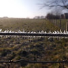 """Gods Grace"" (Frost covering a pasture fence) Richland Twd. yesterday morning 12-11-12<br /> <br /> Photographer's Name: J.R. Rosencrans<br /> Photographer's City and State: Alexandria, IN"