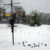 During Wednesday's blizzard, a flock of sparrows enjoy Art Tate's feeder at his Crownpointe home.<br /> <br /> Photographer's Name: Art Tate<br /> Photographer's City and State: Anderson, Ind.