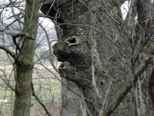 """""""My Squirrel Tree"""" location Little Killbuck Creek off of 500N  :)<br /> <br /> Photographer's Name:  J.R. Rosencrans<br /> Photographer's City and State: Alexandria, IN"""