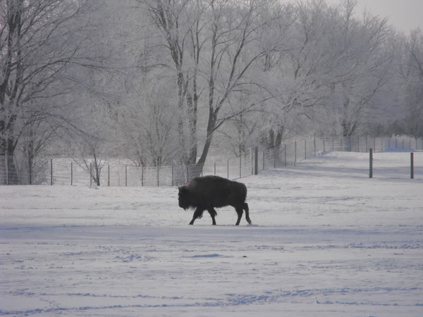 2012 blizzard, picture taken at the Cook Farm in Richland Township.<br /> <br /> Photographer's Name: J.R. Rosencrans<br /> Photographer's City and State: Alexandria, Ind.