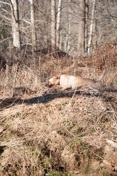 Running, camouflaged Ginny