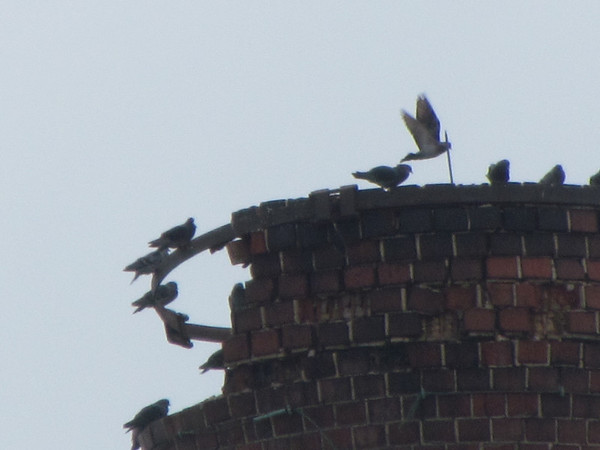 Pigeons sitting on top of the Nicholson File smoke stack.<br /> <br /> Photographer's Name: Brian Fox<br /> Photographer's City and State: Anderson, Ind.